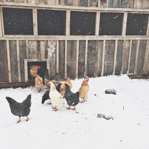 Winter farm life